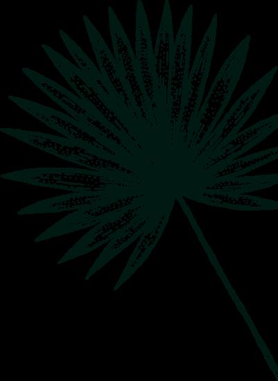 Gravure feuille palmier isautier