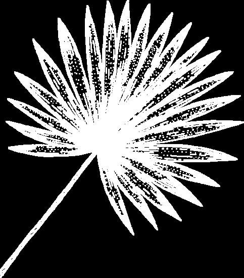 Gravure feuille palmier réunion