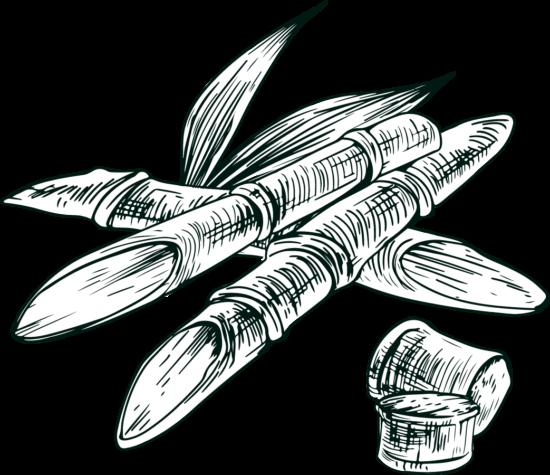 Gravure canne à sucre isautier