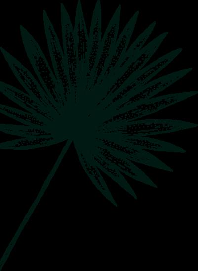 Gravure feuille palmier réunionnais