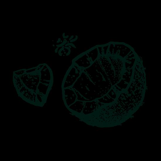 Gravure noix de coco isautier