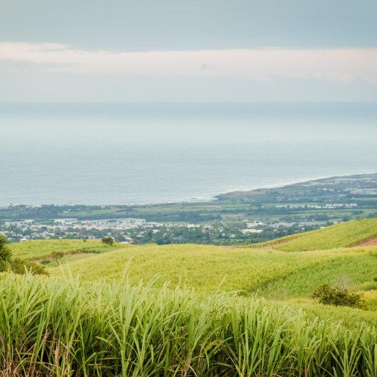 Paysage Réunion Isautier