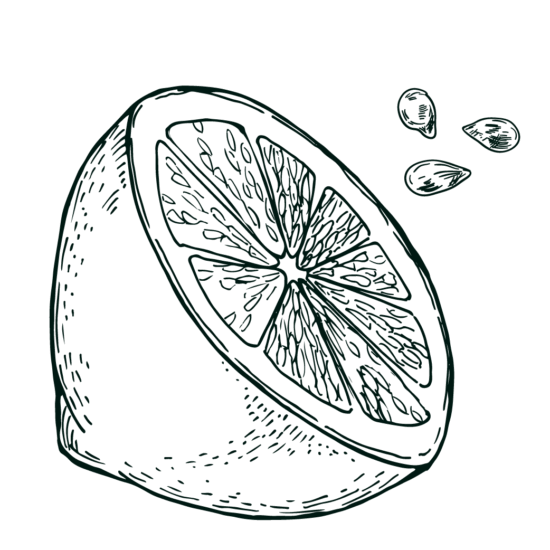 Gravure citron Isautier